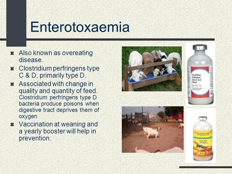Brucella Melitensis Cause: Organism excreted in milk, urine, and feces.
