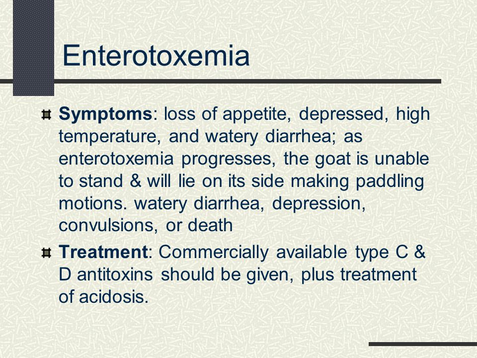 Enterotoxemia Symptoms: loss of appetite, depressed, high temperature, and watery diarrhea; as enterotoxemia progresses, the goat is unable to stand &