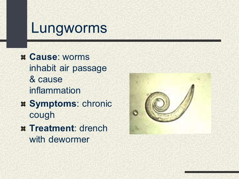 Lungworms Cause: worms inhabit air passage & cause inflammation Symptoms: chronic cough Treatment: drench with dewormer