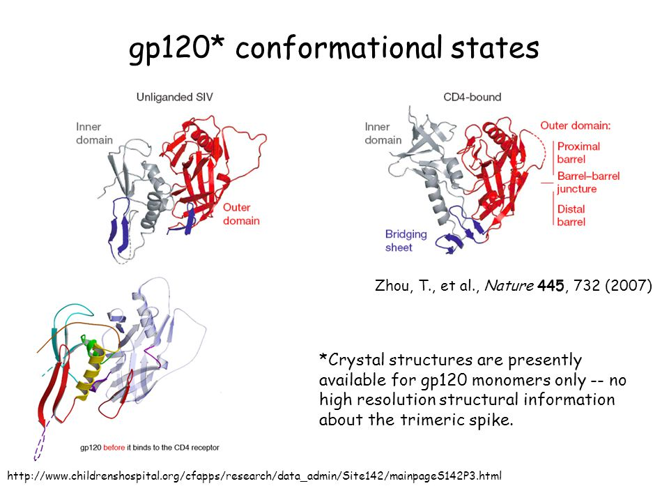 gp120* conformational states Zhou, T., et al., Nature 445, 732 (2007) http://www.childrenshospital.org/cfapps/research/data_admin/Site142/mainpageS142