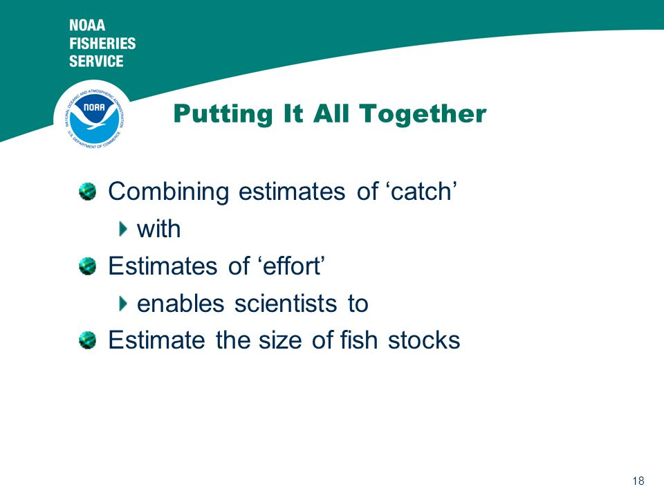 18 Putting It All Together Combining estimates of 'catch' with Estimates of 'effort' enables scientists to Estimate the size of fish stocks
