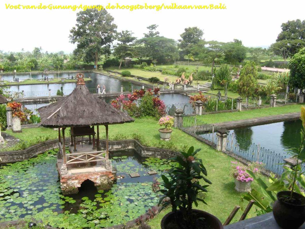 Bali - Tuin van de Taman Selini Beach-Pemutaran