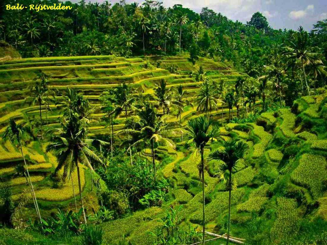 Bali - TempeL op Menjangan