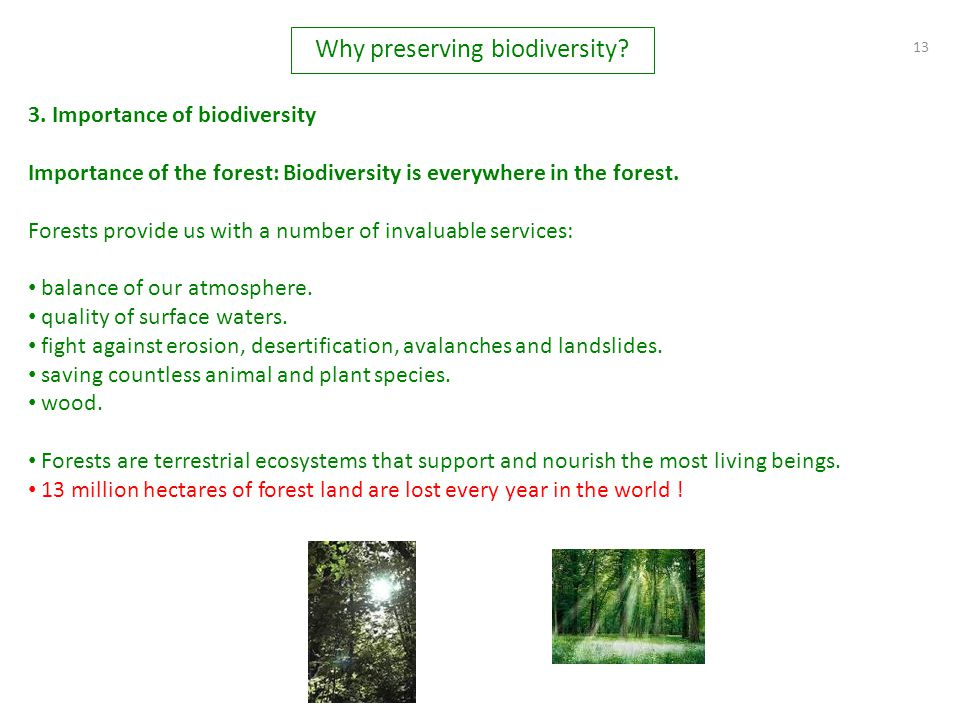 13 3. Importance of biodiversity Importance of the forest: Biodiversity is everywhere in the forest. Forests provide us with a number of invaluable se