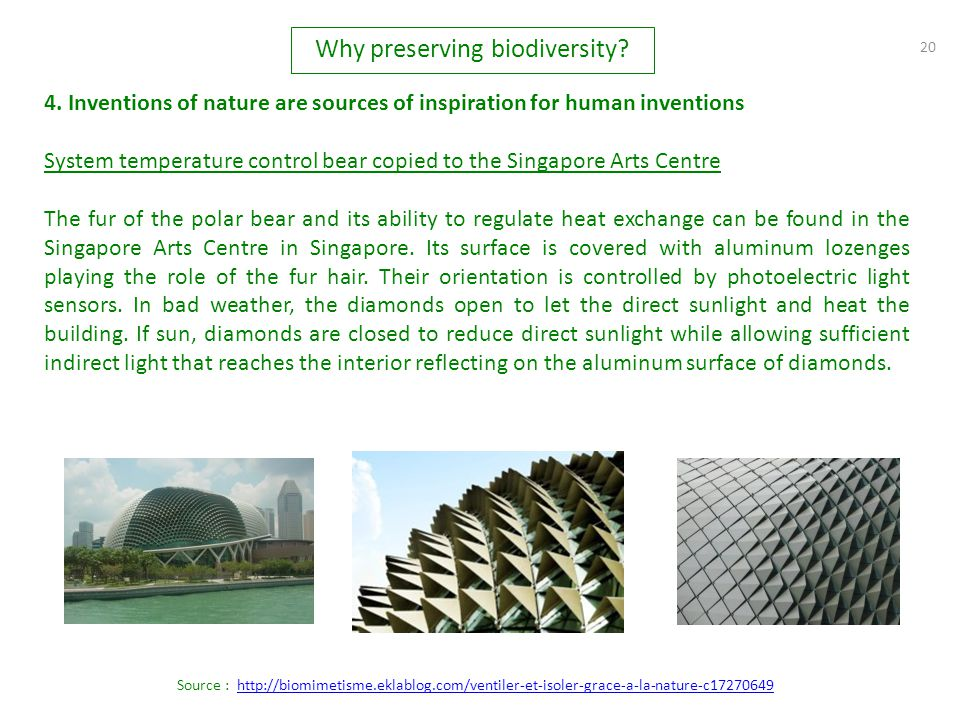 20 4. Inventions of nature are sources of inspiration for human inventions System temperature control bear copied to the Singapore Arts Centre The fur