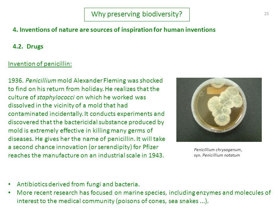 25 4. Inventions of nature are sources of inspiration for human inventions Invention of penicillin: 1936. Penicillium mold Alexander Fleming was shock