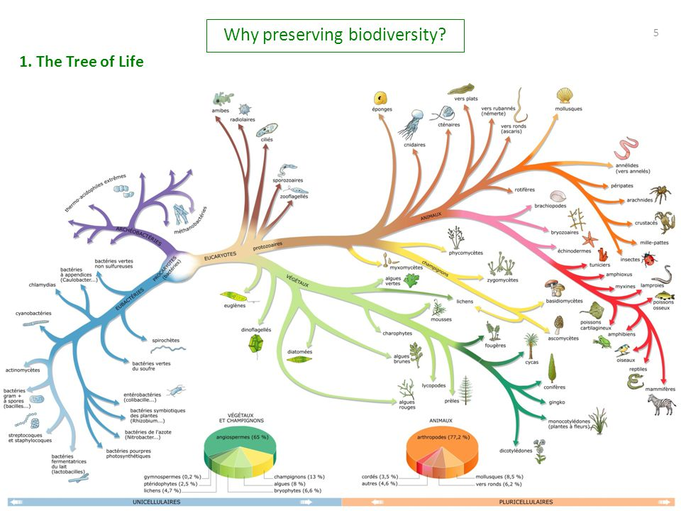 5 5 1. The Tree of Life Why preserving biodiversity?