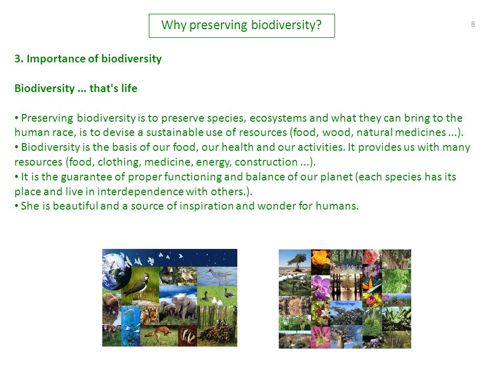 8 3. Importance of biodiversity Biodiversity... that's life Preserving biodiversity is to preserve species, ecosystems and what they can bring to the