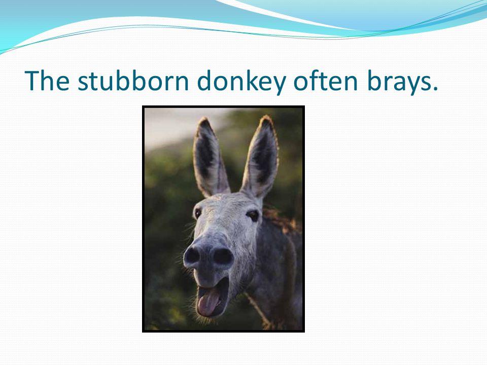 The stubborn donkey often brays.