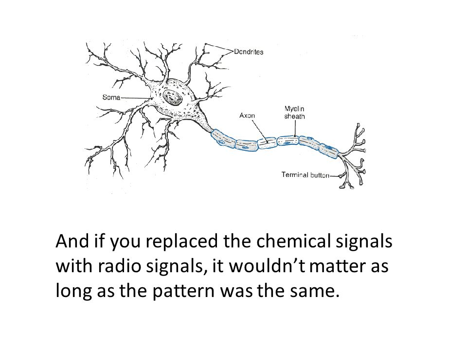 And if you replaced the chemical signals with radio signals, it wouldn't matter as long as the pattern was the same.