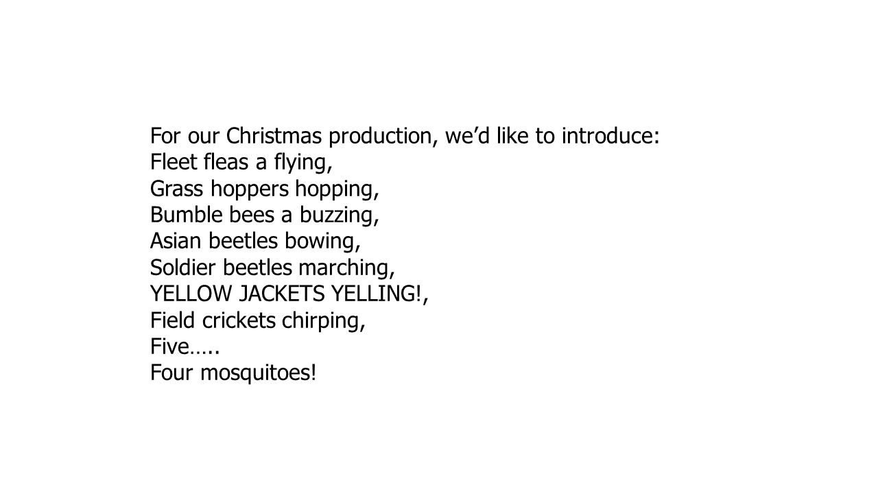 For our Christmas production, we'd like to introduce: Fleet fleas a flying, Grass hoppers hopping, Bumble bees a buzzing, Asian beetles bowing, Soldie
