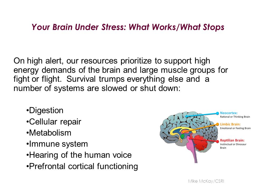 Your Brain Under Stress: What Works/What Stops On high alert, our resources prioritize to support high energy demands of the brain and large muscle gr