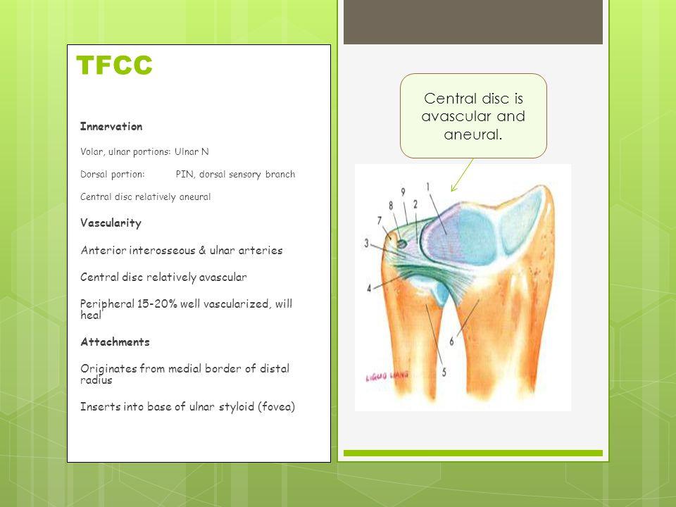 TFCC Innervation Volar, ulnar portions: Ulnar N Dorsal portion: PIN, dorsal sensory branch Central disc relatively aneural Vascularity Anterior intero