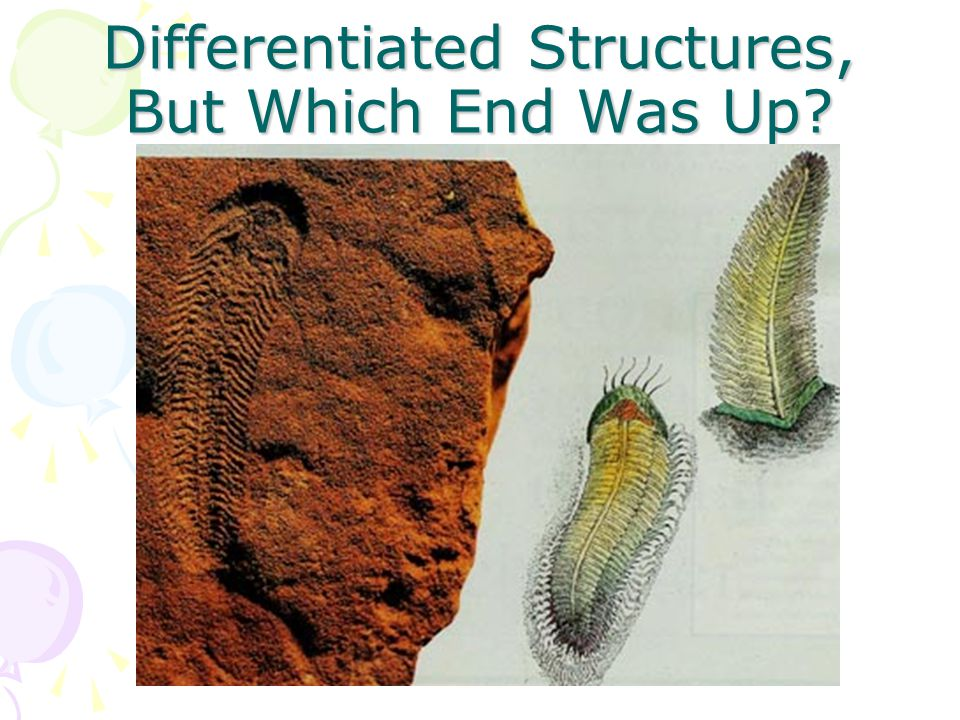 Differentiated Structures, But Which End Was Up?