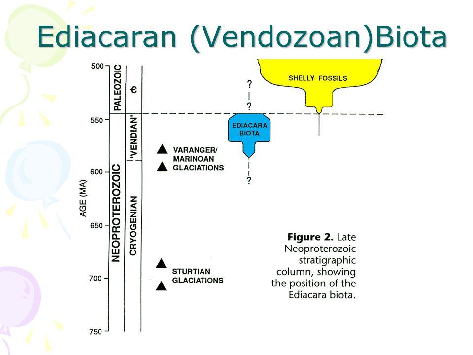 Ediacaran (Vendozoan)Biota