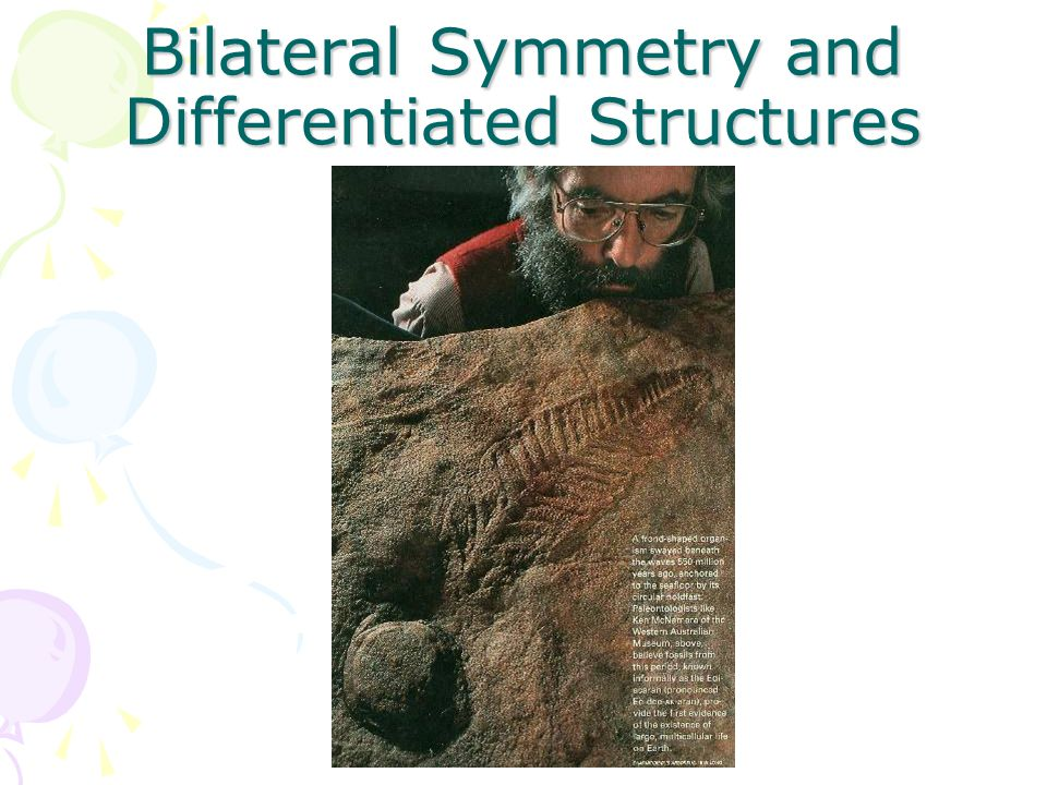 Bilateral Symmetry and Differentiated Structures