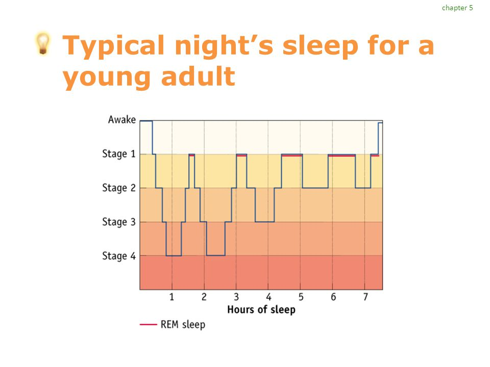 Typical night's sleep for a young adult chapter 5