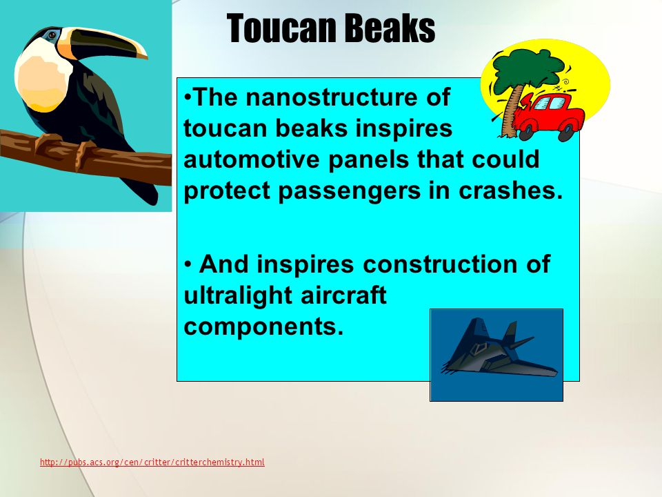 Toucan Beaks The nanostructure of toucan beaks inspires automotive panels that could protect passengers in crashes. And inspires construction of ultra