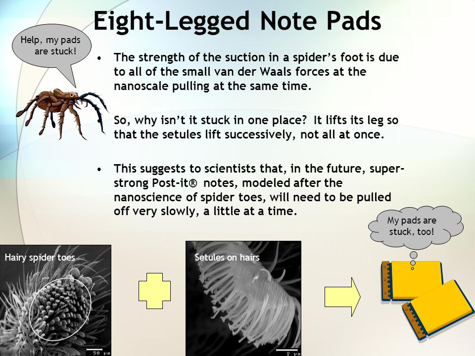 Eight-Legged Note Pads The strength of the suction in a spider's foot is due to all of the small van der Waals forces at the nanoscale pulling at the