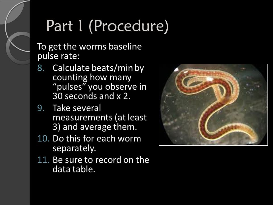 Part I (Procedure) Drug your worm in the following way: 12.Take up a small squirt of your designated drug.