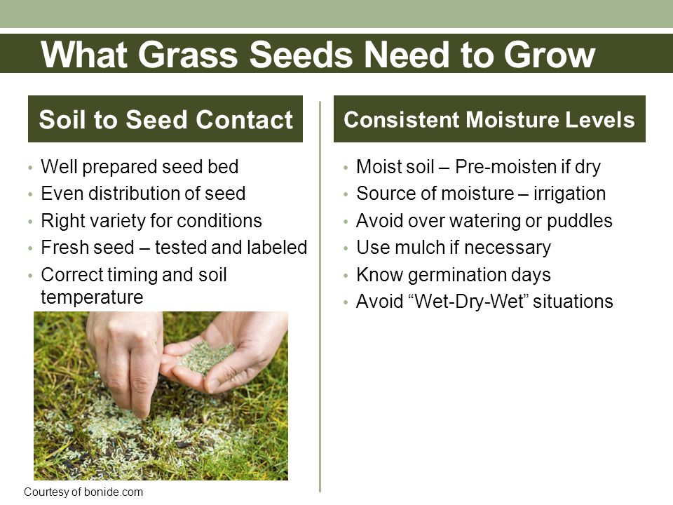 Soil to Seed Contact Well prepared seed bed Even distribution of seed Right variety for conditions Fresh seed – tested and labeled Correct timing and soil temperature Consistent Moisture Levels Moist soil – Pre-moisten if dry Source of moisture – irrigation Avoid over watering or puddles Use mulch if necessary Know germination days Avoid Wet-Dry-Wet situations Courtesy of bonide.com What Grass Seeds Need to Grow