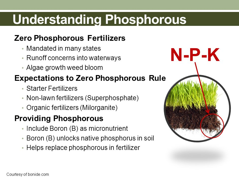 Understanding Phosphorous Zero Phosphorous Fertilizers Mandated in many states Runoff concerns into waterways Algae growth weed bloom Expectations to Zero Phosphorous Rule Starter Fertilizers Non-lawn fertilizers (Superphosphate) Organic fertilizers (Milorganite) Providing Phosphorous Include Boron (B) as micronutrient Boron (B) unlocks native phosphorus in soil Helps replace phosphorous in fertilizer N-P-K Courtesy of bonide.com