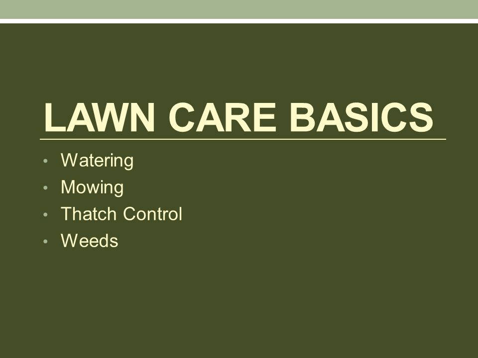 LAWN CARE BASICS Watering Mowing Thatch Control Weeds