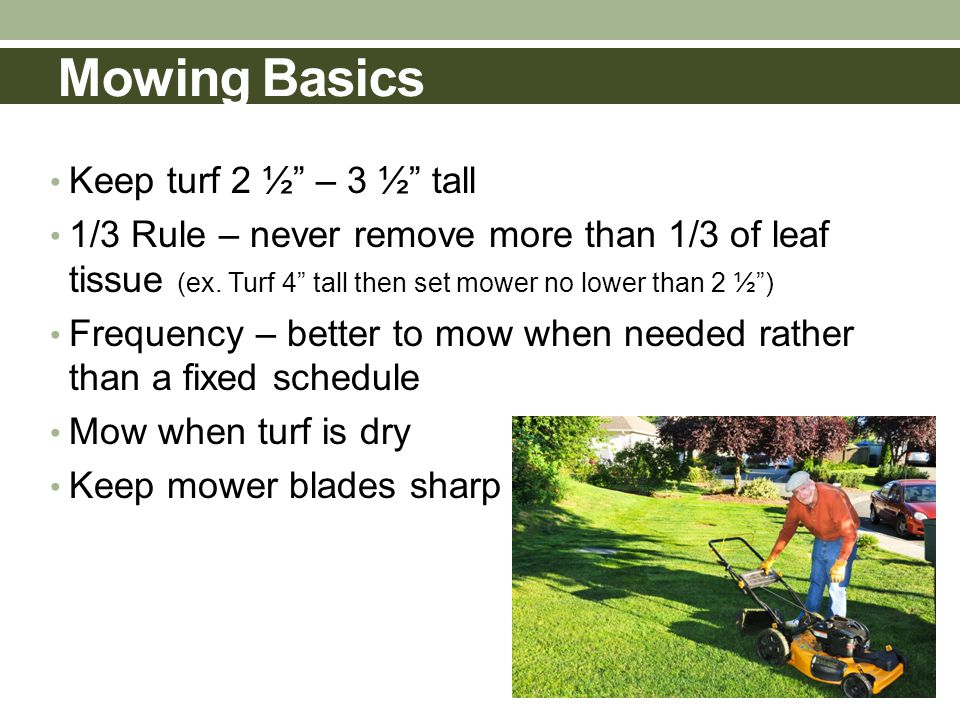 Mowing Basics Keep turf 2 ½ – 3 ½ tall 1/3 Rule – never remove more than 1/3 of leaf tissue (ex.