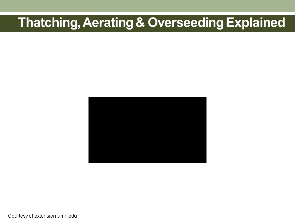 Thatching, Aerating & Overseeding Explained Courtesy of extension.umn.edu