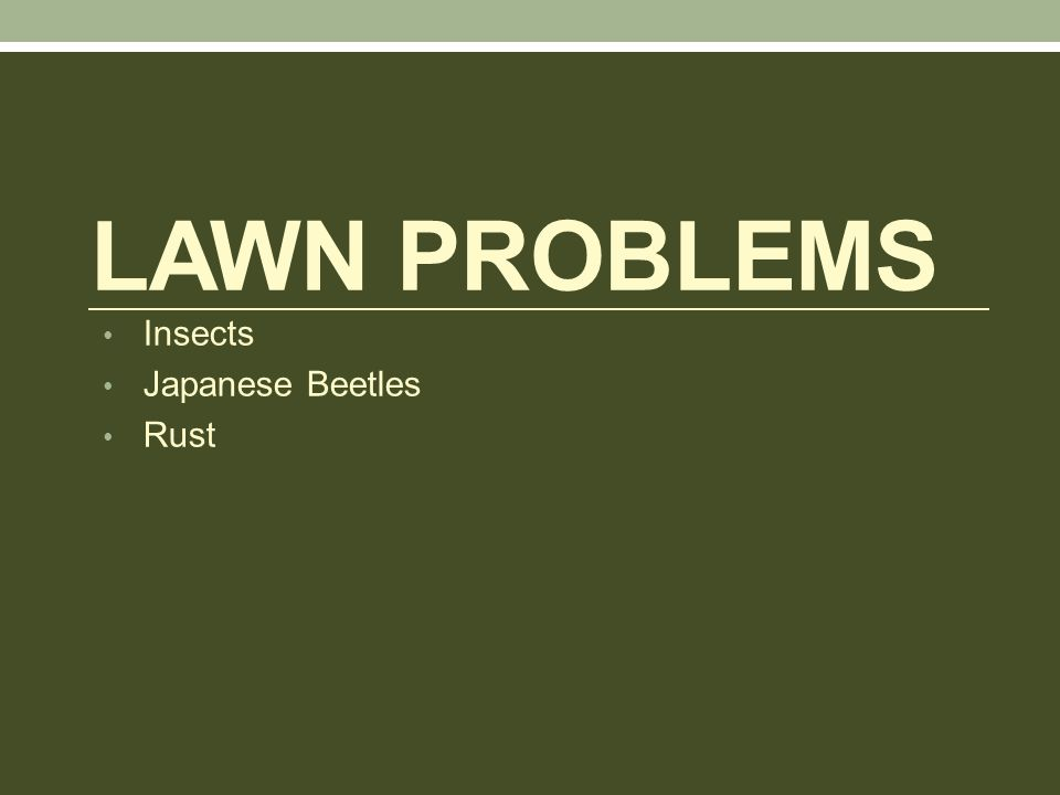 LAWN PROBLEMS Insects Japanese Beetles Rust