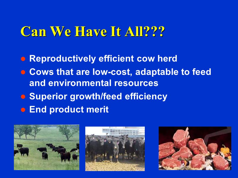 Can We Have It All??? Reproductively efficient cow herd Cows that are low-cost, adaptable to feed and environmental resources Superior growth/feed eff