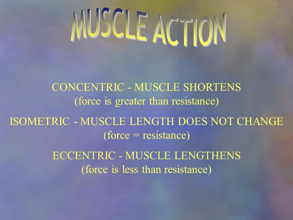 CONCENTRIC - MUSCLE SHORTENS (force is greater than resistance) ISOMETRIC - MUSCLE LENGTH DOES NOT CHANGE (force = resistance) ECCENTRIC - MUSCLE LENGTHENS (force is less than resistance)