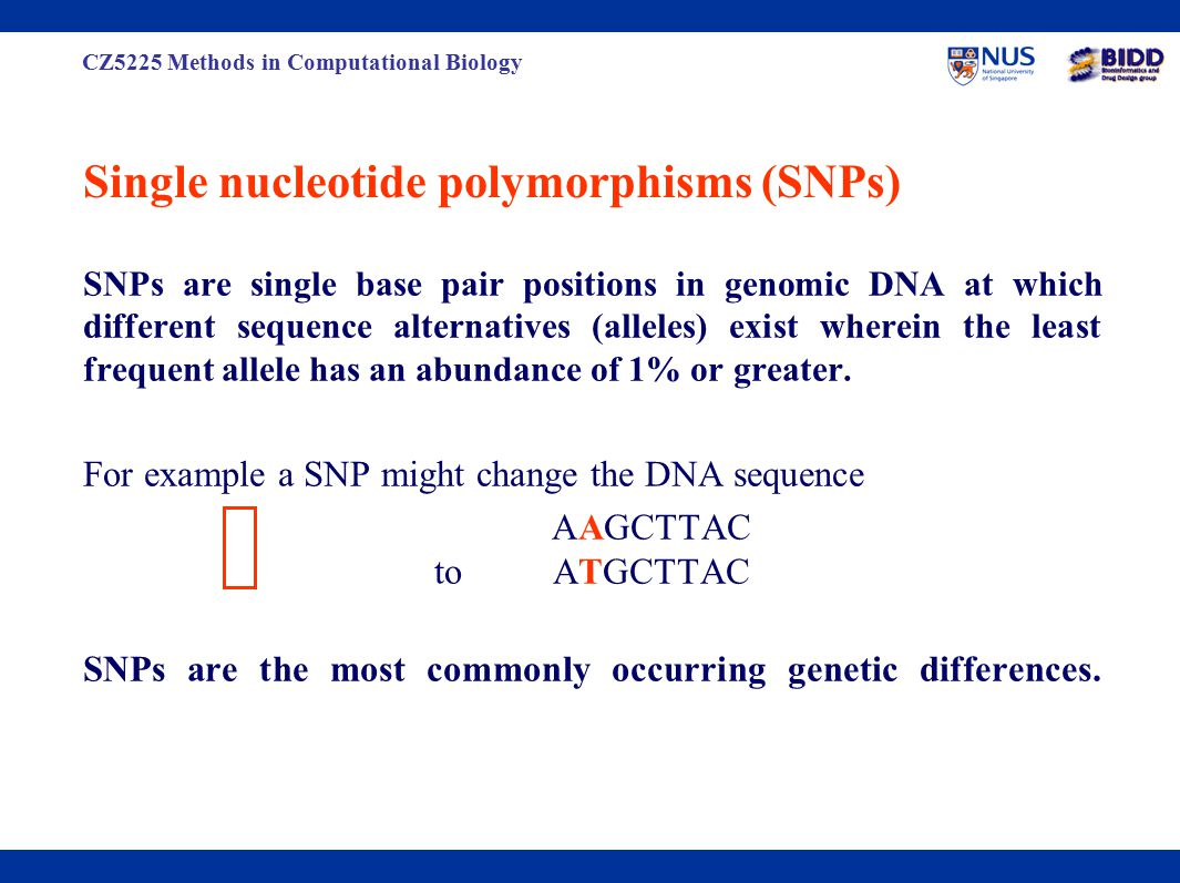 CZ5225 Methods in Computational Biology Single nucleotide polymorphisms (SNPs) SNPs are single base pair positions in genomic DNA at which different sequence alternatives (alleles) exist wherein the least frequent allele has an abundance of 1% or greater.