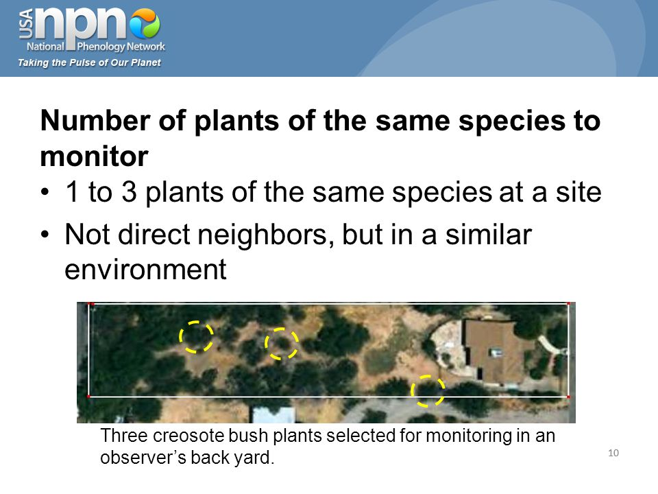 10 1 to 3 plants of the same species at a site Not direct neighbors, but in a similar environment Number of plants of the same species to monitor 10 Three creosote bush plants selected for monitoring in an observer's back yard.