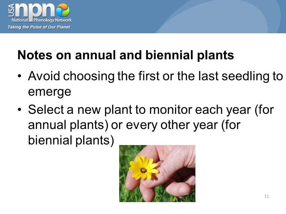 Avoid choosing the first or the last seedling to emerge Select a new plant to monitor each year (for annual plants) or every other year (for biennial