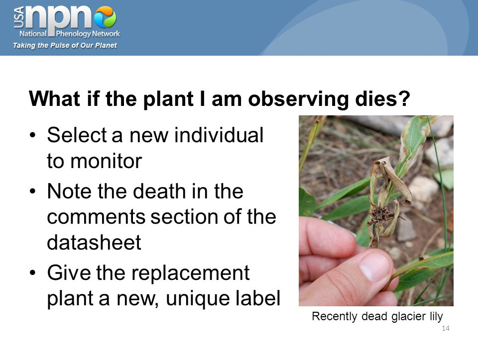 What if the plant I am observing dies.