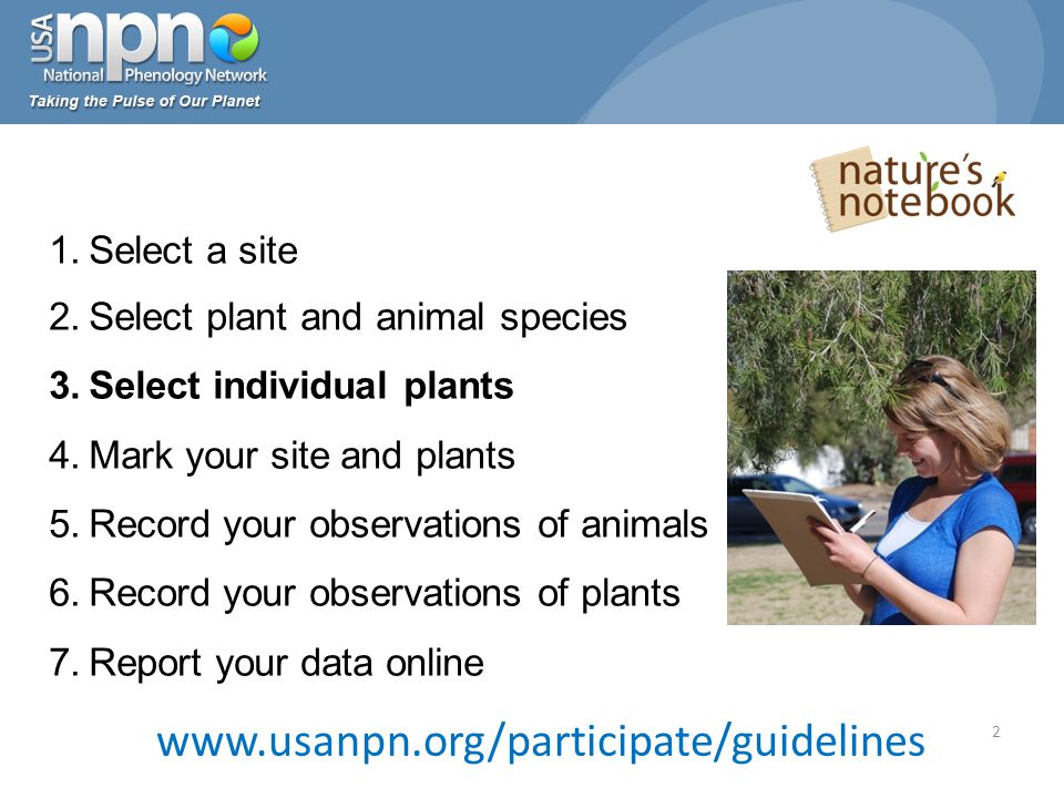 www.usanpn.org/participate/guidelines 2 1.Select a site 2.Select plant and animal species 3.Select individual plants 4.Mark your site and plants 5.Record your observations of animals 6.Record your observations of plants 7.Report your data online