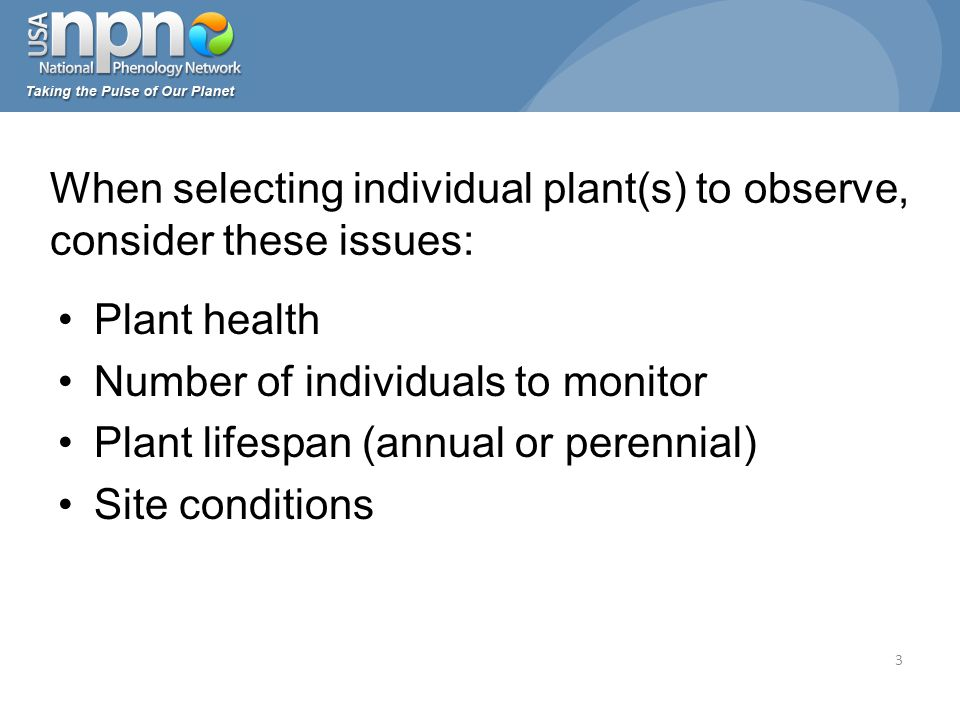 Plant health Number of individuals to monitor Plant lifespan (annual or perennial) Site conditions When selecting individual plant(s) to observe, consider these issues: 3