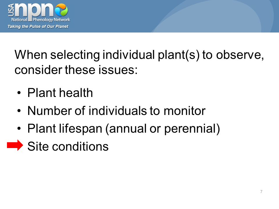 Plant health Number of individuals to monitor Plant lifespan (annual or perennial) Site conditions When selecting individual plant(s) to observe, consider these issues: 7