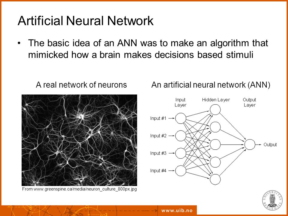 Artificial Neural Network The basic idea of an ANN was to make an algorithm that mimicked how a brain makes decisions based stimuli From www.greenspine.ca/media/neuron_culture_800px.jpg A real network of neuronsAn artificial neural network (ANN)