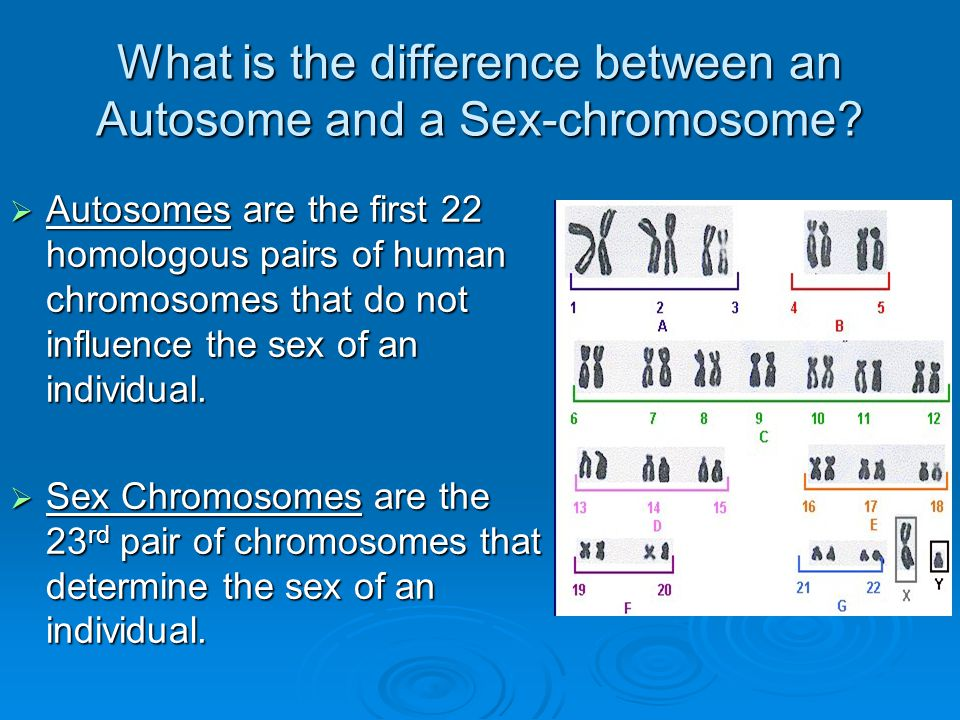 How do you think Chromosomal Mutations with differing number of chromosomes develops.