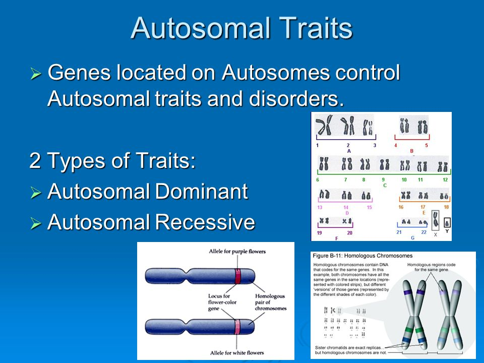 Autosomal Recessive Traits  Heterozygotes are Carriers with a normal phenotype.