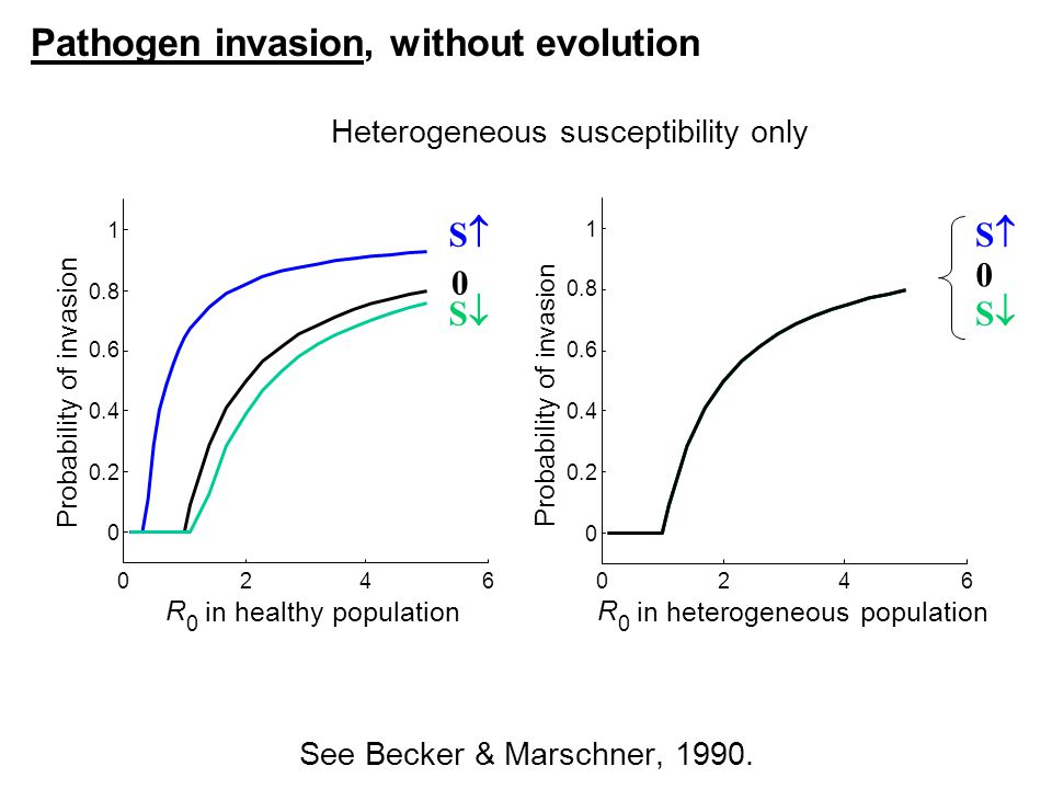 0246 0 0.2 0.4 0.6 0.8 1 R 0 in healthy population Probability of invasion Pathogen invasion, without evolution SS 0 SS 0246 0 0.2 0.4 0.6 0.8 1 R