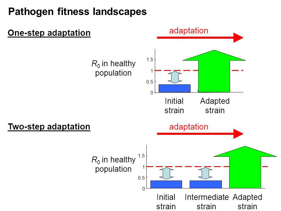 Initial strain Intermediate strain Adapted strain 0 0.5 1 1.5 Pathogen fitness landscapes adaptation One-step adaptation R 0 in healthy population ada