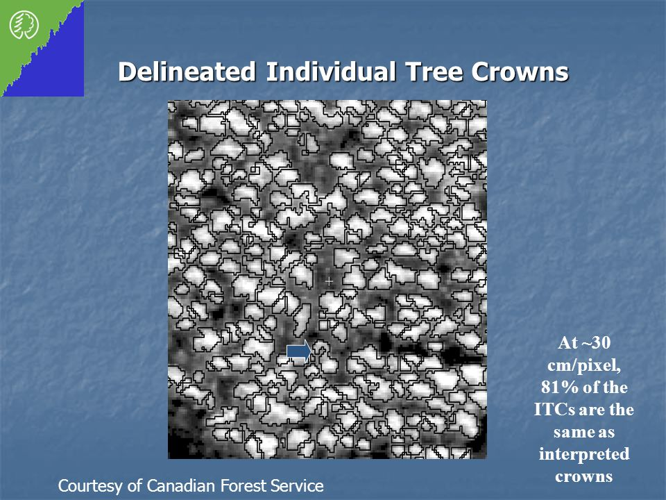 Delineated Individual Tree Crowns At ~30 cm/pixel, 81% of the ITCs are the same as interpreted crowns Courtesy of Canadian Forest Service