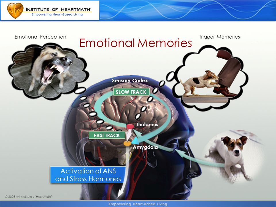 © 2005-v4 Institute of HeartMath ® Emotional Memories SLOW TRACK Sensory Cortex Thalamus Amygdala FAST TRACK Emotional PerceptionTrigger Memories Activation of ANS and Stress Hormones Empowering Heart-Based Living
