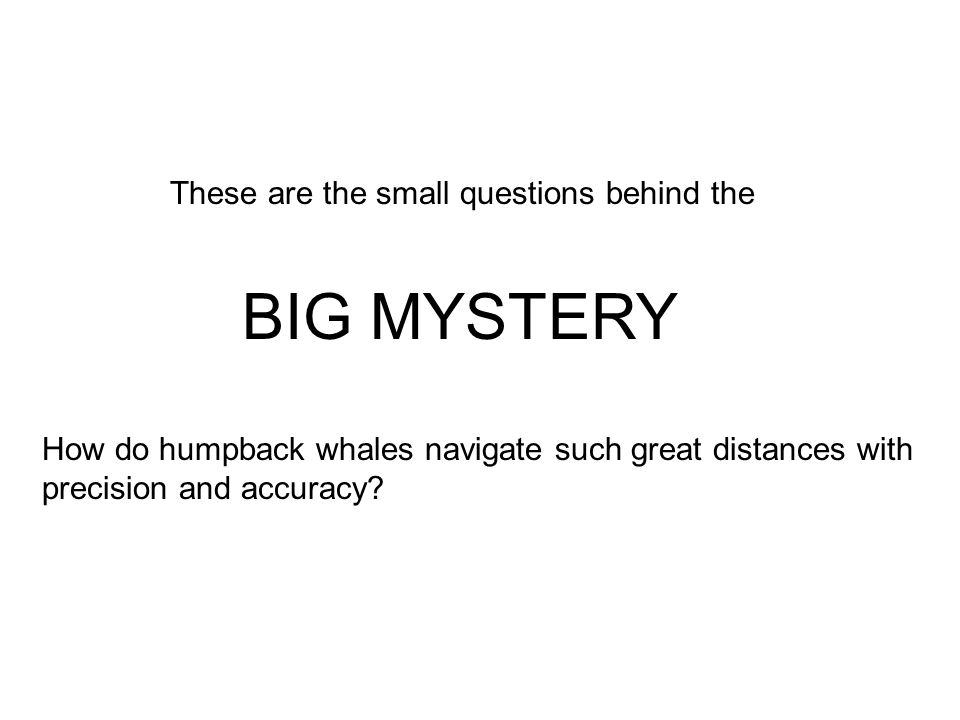 BIG MYSTERY How do humpback whales navigate such great distances with precision and accuracy.