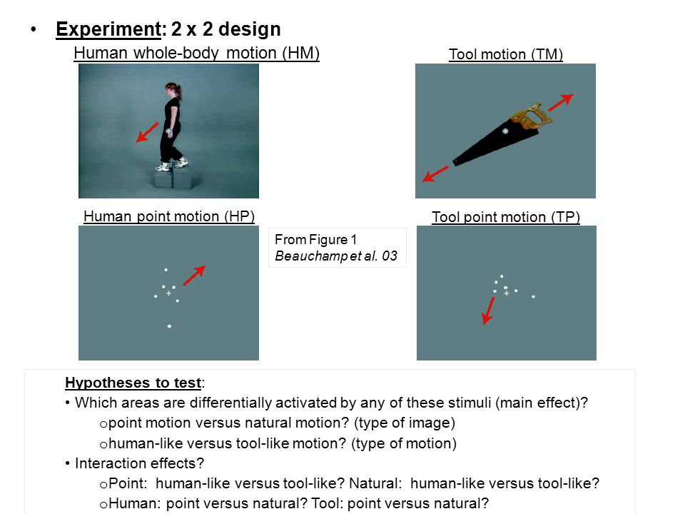 Experiment: 2 x 2 design Human whole-body motion (HM) Hypotheses to test: Which areas are differentially activated by any of these stimuli (main effec