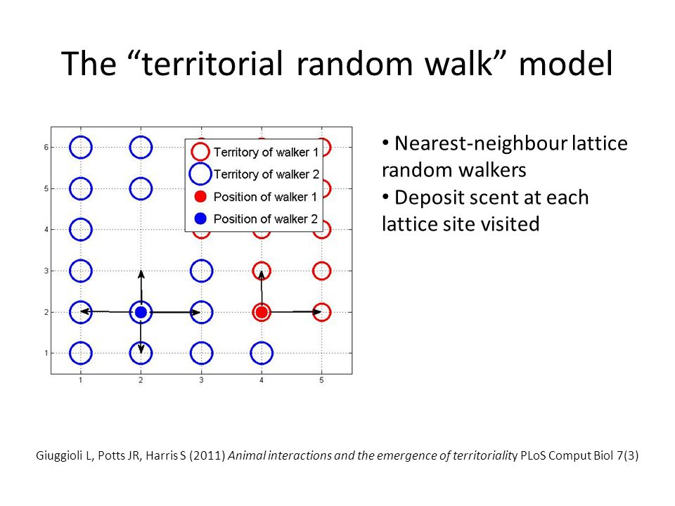 "The ""territorial random walk"" model Nearest-neighbour lattice random walkers Deposit scent at each lattice site visited Giuggioli L, Potts JR, Harris"
