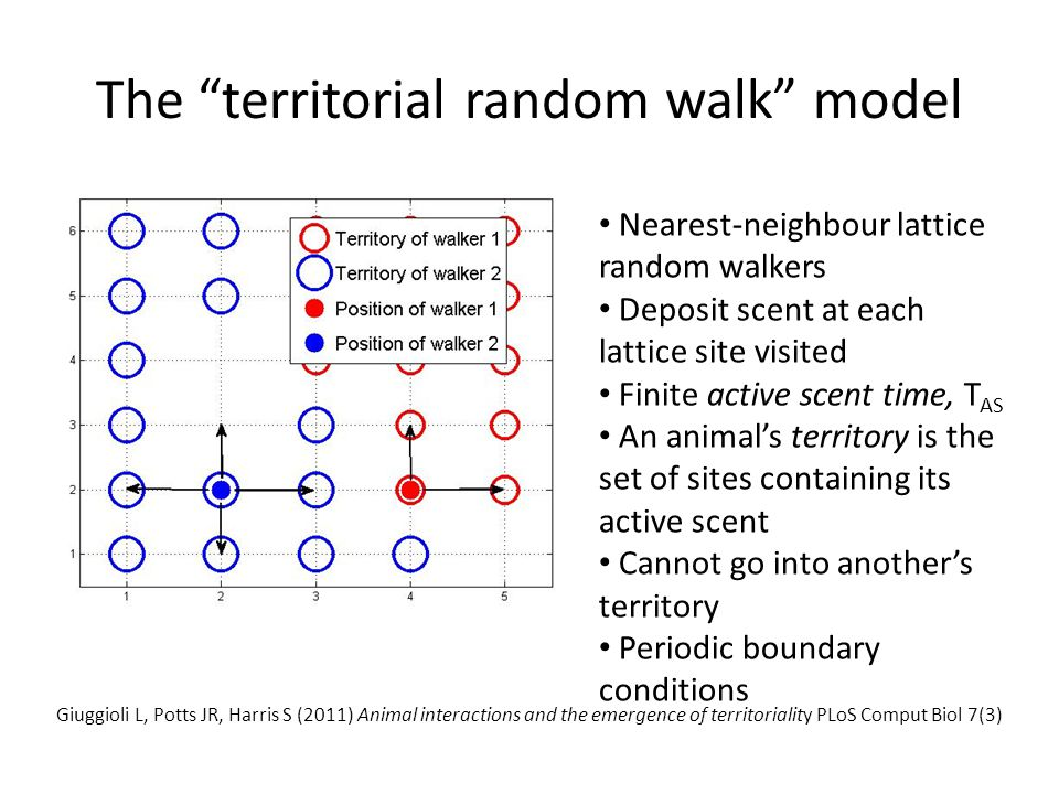 "The ""territorial random walk"" model Nearest-neighbour lattice random walkers Deposit scent at each lattice site visited Finite active scent time, T AS"